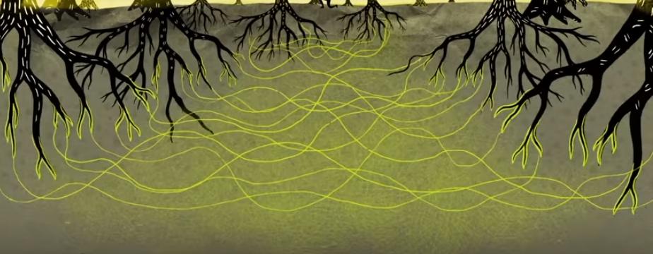Wood Wide Web, rete di alberi connessi tra di loro