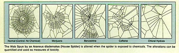 Effetti di diverse sostanze sulla capacità dei ragni di tessere le tele