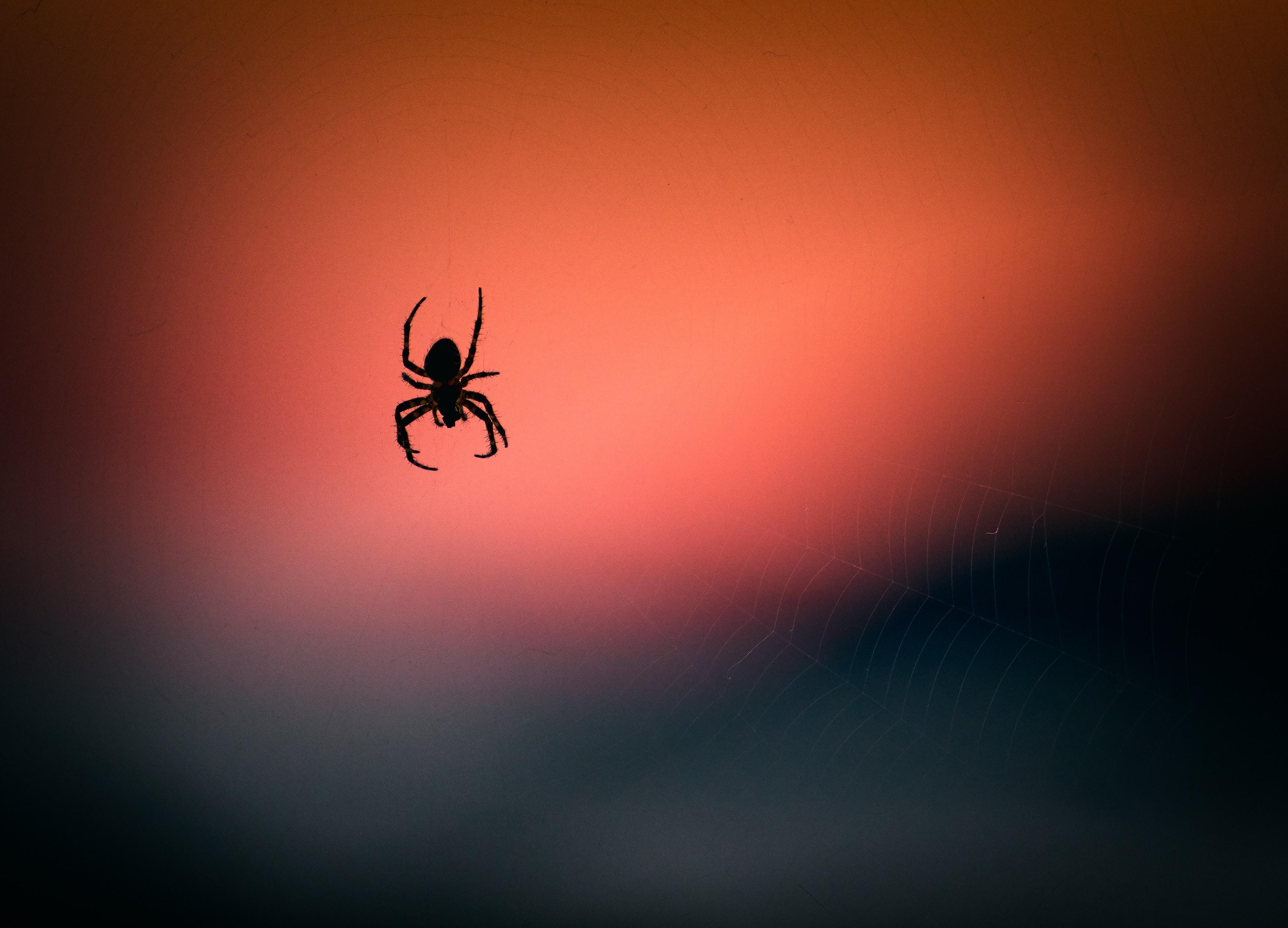 Ragno silhouette