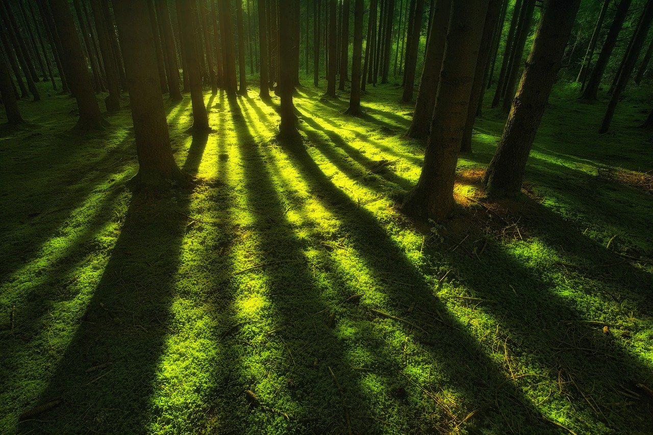 Alberi nella foresta