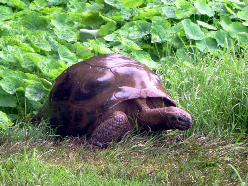 Jonathan la tartaruga gigante