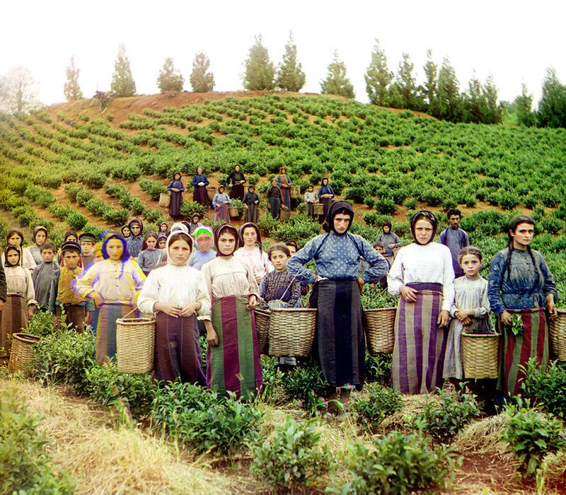 Donne greche che raccolgono il tè a Chakvi, Georgia